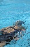 在水之下的小游泳者 免版税库存照片