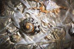 在水之下的海扇壳 库存图片