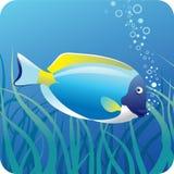 在水之下的鱼外科医生 库存例证