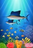 在水动画片下的旗鱼游泳 库存例证