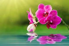 在水反映的桃红色兰花花 背景蜡烛开花温泉毛巾黄色 库存照片