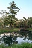 在水和人行桥反映的杉木 免版税库存图片
