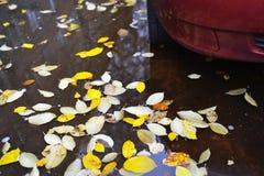 在水坑的下落的黄色叶子在汽车附近 多雨秋天的日 免版税库存照片