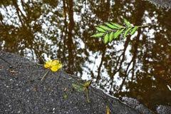 在水坑的秋叶 免版税库存图片