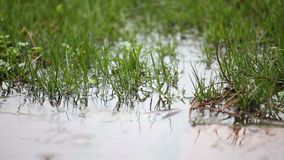 在水坑的雨下落 影视素材