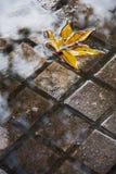 在水坑的黄色叶子 免版税库存图片