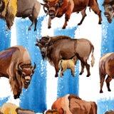 在水彩样式的异乎寻常的北美野牛野生动物样式 库存例证