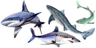 在水彩样式的鲨鱼野生鱼被隔绝的 库存例证