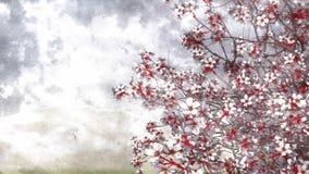 在水彩艺术的开花的佐仓樱桃称呼4K 股票录像