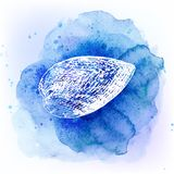 在水彩蓝色背景的贝壳 背景峡湾光芒海运星期日 库存例证
