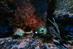 在水族馆有海葵的,摩纳哥海洋学博物馆的水下的风景 库存图片