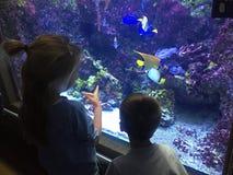 在水族馆的两条儿童赞赏的五颜六色的异乎寻常的鱼 免版税库存照片