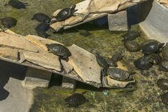 在水族馆的乌龟 库存照片