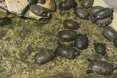 在水族馆的乌龟 免版税库存图片