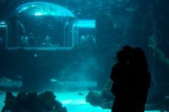 在水族馆的人观看的鱼 canaria gran 西班牙 2018年5月 库存照片