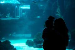 在水族馆的人观看的鱼 canaria gran 西班牙 2018年5月 免版税库存照片