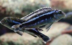 在水族馆的大鱼在海洋,海alt生物 库存照片