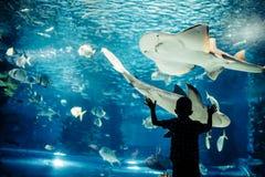 在水族馆的小男孩观看的鱼 免版税图库摄影