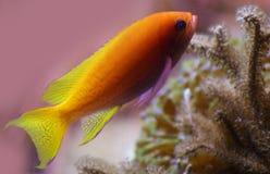 在水族馆的热带鱼在海洋,海盐生物 免版税库存照片