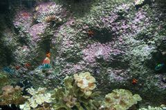在水族馆的美丽的五颜六色的鱼,越南 库存照片