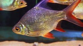在水族馆的美丽的鱼,看从边 股票视频