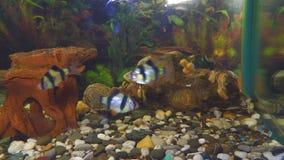 在水族馆的鱼倒钩 股票视频