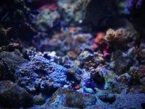 在水族馆的Unterwater世界在巴塞罗那 免版税库存图片