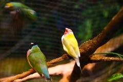 在水族馆迪拜的鸟 免版税库存图片