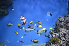 在水族馆颜色的鱼 免版税库存图片
