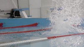 在水池的专业游泳者游泳速度的 股票录像