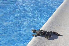 在水池的蜥蜴 免版税库存图片