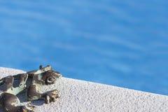 在水池的蜥蜴 免版税库存照片