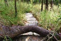 在水泥台阶的树干在山的森林里 免版税库存照片
