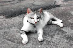 在水泥地板上的睡觉猫 图库摄影