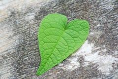 在水泥地板上的美丽的心形的叶子 库存图片