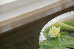 在水泥水池的美丽的黄色莲花 免版税图库摄影