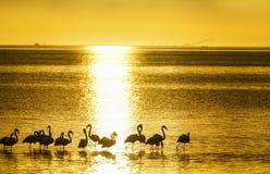 在水现出轮廓的火鸟在灿烂光辉日落渐近 库存图片