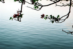 在水的分行 免版税库存图片