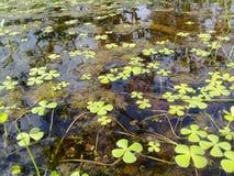 在水的叶子 免版税库存图片