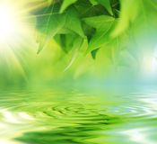 在水的叶子 库存图片