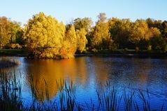 在水的大黄色树与秋天叶子 美丽关于 库存图片