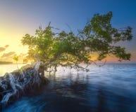在水的婆罗洲的树和海岸靠岸 免版税库存照片