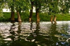 在水的强光 库存图片