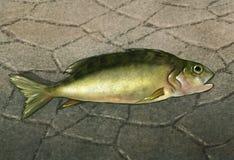 在水的数字式艺术品外面的一条鱼 图库摄影