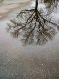 在水的树反射 免版税库存图片