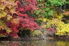 在水的秋叶 免版税库存图片