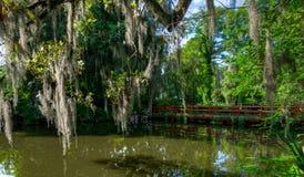 在水的红色桥梁,与青苔盖了树 查尔斯顿,SC 库存图片