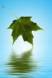 在水的绿色叶子 免版税库存图片