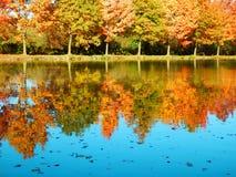 在水的美好的秋季树反射 免版税库存照片
