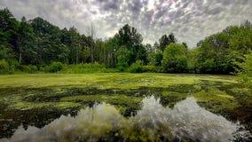在水的自然 免版税库存照片